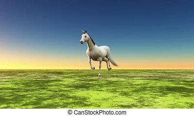 horse - running horse