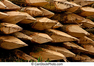 Wood in a lumber mill ready to be transported to other...