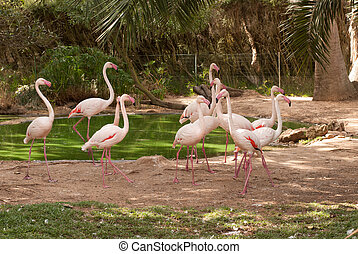 The pink flamengo in Zoo in Lagos, portugal