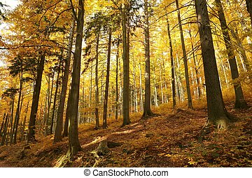 Autumn landscape of mixed forest in the morning