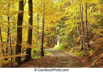 Pathway through autumn forest - Pathway through the woods on...