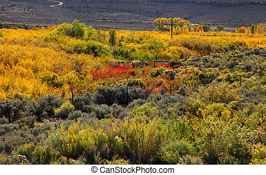Autumn bushes - Colorful bushes during peak autumn time in...