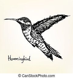 hummingbird sketch vector - image of hummingbird sketch...