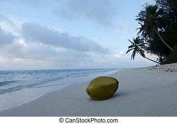 Muri Lagoon in Rarotonga Cook Islands - Coconut on a sandy...