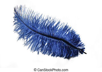Blue Feather - Blue feather isolated over white background