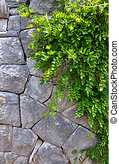 Old Stone wall and Green creeper plant - vertical picture