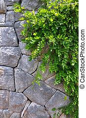 stary, Kamień, ściana, zielony, Pnącze, roślina, -,...