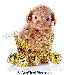 Puppy in a wattled basket with New Years balls Puppy of a...