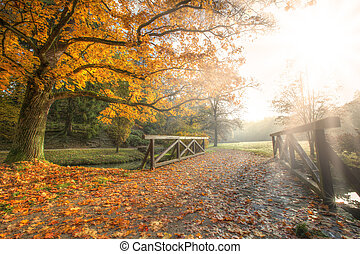 Autumn landscape - Rural autumn park view in beautiful color...