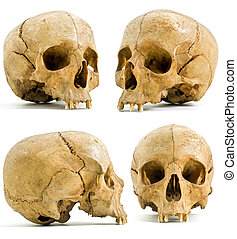 human skull - four angels of human skull isolated on white