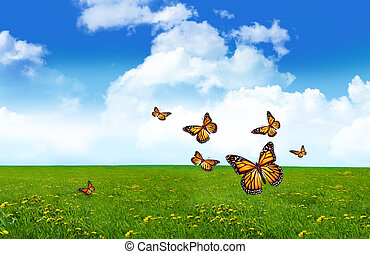 Group of orange butterflies in a field of tall grass
