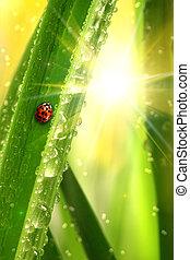 Ladybug climbing a leaf with fresh morning dew