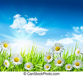 Daisies and grass with bright blue sky and clouds