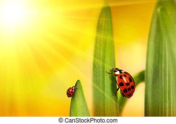 Ladybug climbing leaf with sun rays - Ladybug climbing tulip...