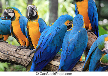 Macaws on the tree