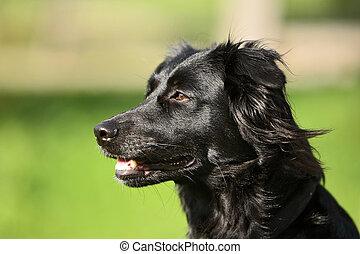 Dog - dog look