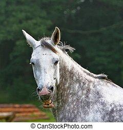 keep smile - Horse smile