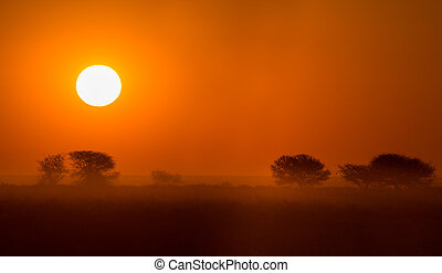 Beautiful african sunset - African sunset with silhouettes...