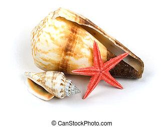 Shellfish on white background