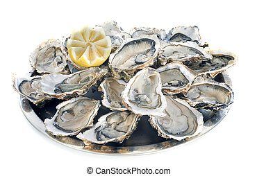 french oysters in front of white background