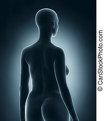 Woman in anatomical position x-ray black posterior view