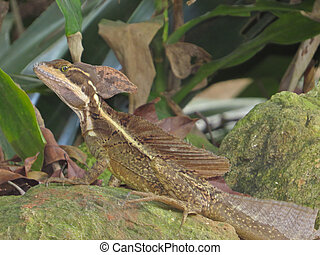 perched, lagarto,  Jesus