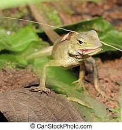 Lizard Green Lizard finding food
