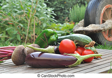 freshly vegetables in garden - Freshly harvested vegetables...