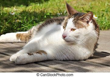 cat on terrace - Cat sunbathing on deck