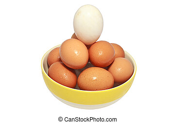One white egg between brown eggs.