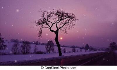 Winter night - Snowing winter night