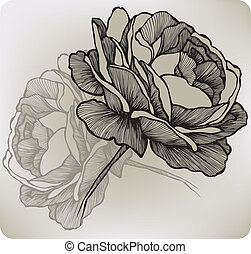 Blooming rose, hand-drawing. Vector illustration.