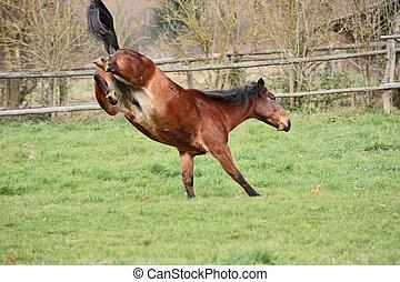 Horse moguls