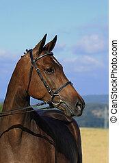 Hores mare - Horse