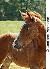 horse - foal