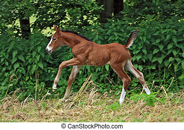 foal 3days old