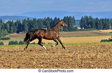 horse running - horse