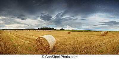 Straw bales pano - Panorama of straw bales in a field under...