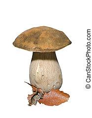 Mushroom (Cape) 6