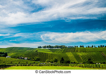 Vineyards along the Moselle river, Luxembourg - Hill s...