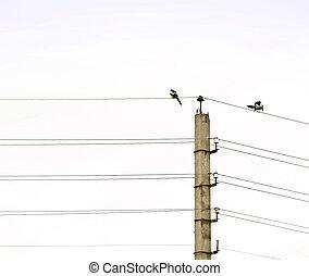 Aves, telégrafo