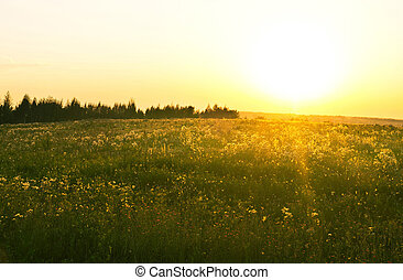 steppe - sunset in field