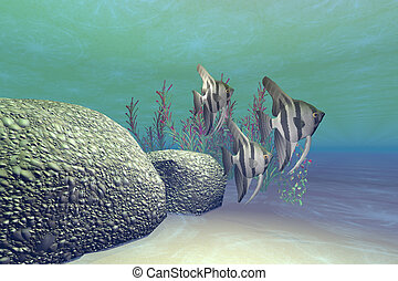 ANGEL FISH - A groupl of angelfish swim near a reef