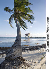 Palm and Hut at Sunset - A single palm tree and a hut at the...