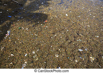 Trash and Debris on the Shore