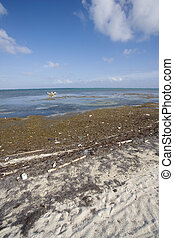 Trash and Debris on the Shore - Trash and debris is blown...