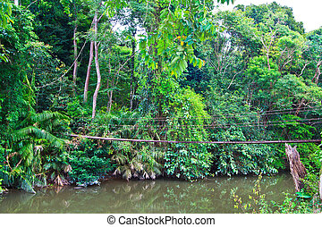 Víz, Bridzs, Erdő, keresztül, Felfüggesztés