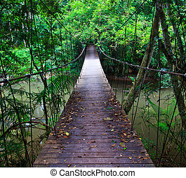 Suspension bridge across the water in the forest