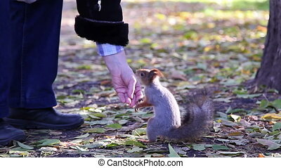 Squirrel in the park produces nuts