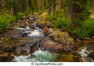 Cascade Creek Grand Tetons - Crystal clear water in Cascade...